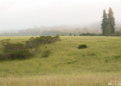 UC Santa Cruz Engagement